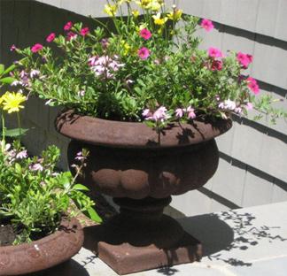 landscape-flowers